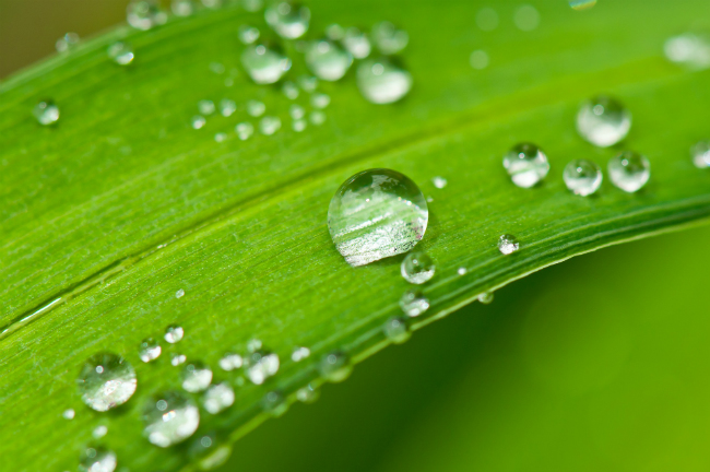 Water droplet on a leaf